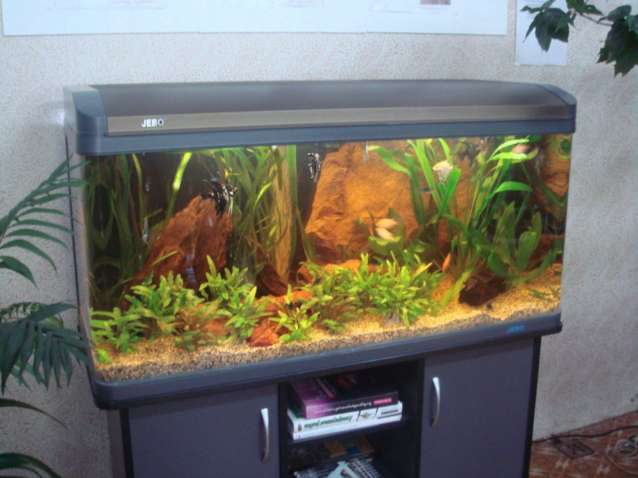 Сделать аквариум на 300 литров