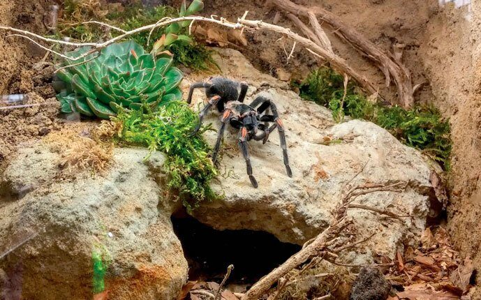 terrarium_for_spiders